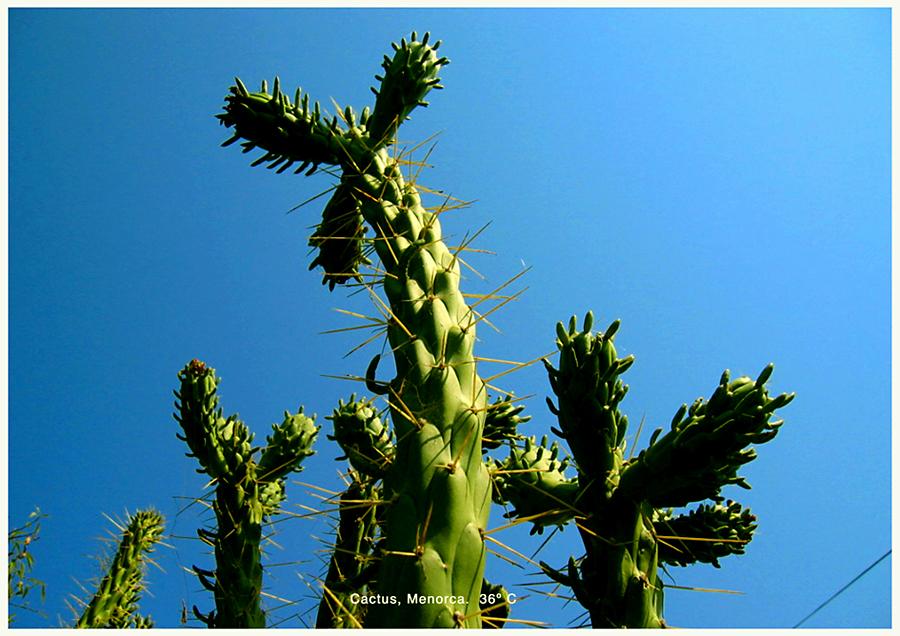 http://andresflajszer.com/files/gimgs/41_cactus-copiar.jpg